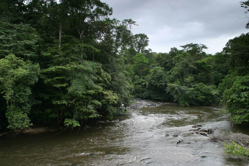 Fijnvertakt rivierstelsel