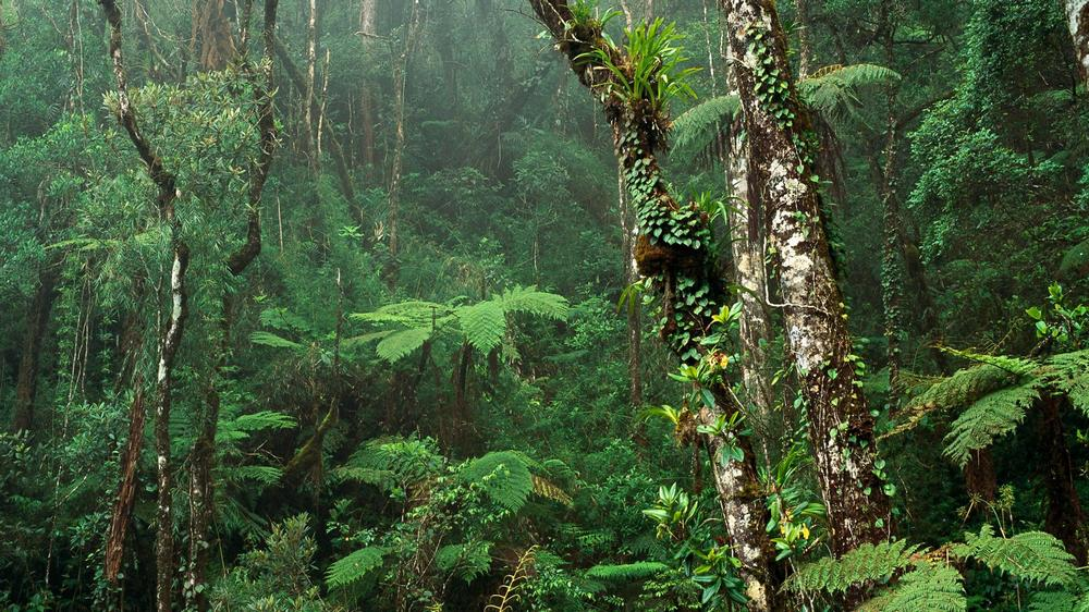 Tropisch oerwoud