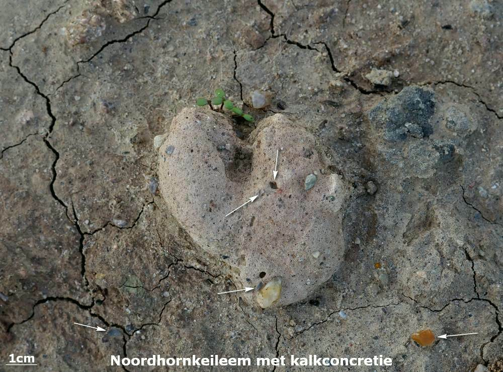 040. Noordhornkeileem met kalkconcretie - Emmen