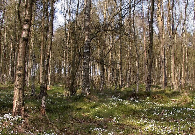 Boslandschap tijdens Alleröd