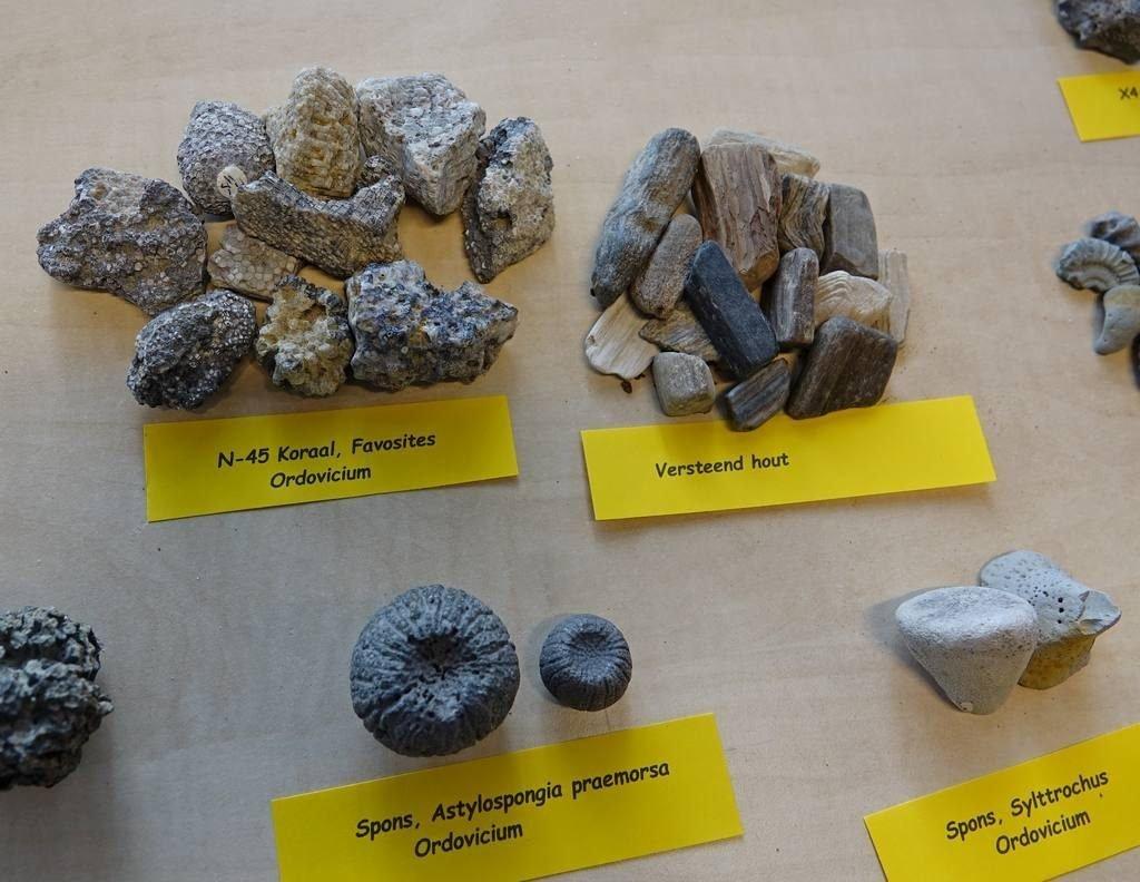 004b-lavendelblauwe-fossielen-peter-de-vries-sappemeer
