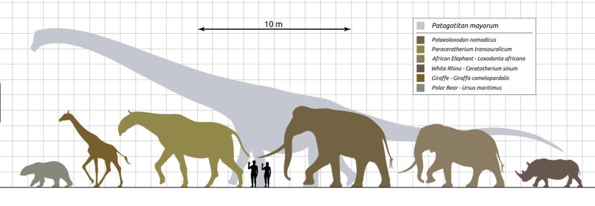 Coxartroza definitie clasificare stadii de evolutie