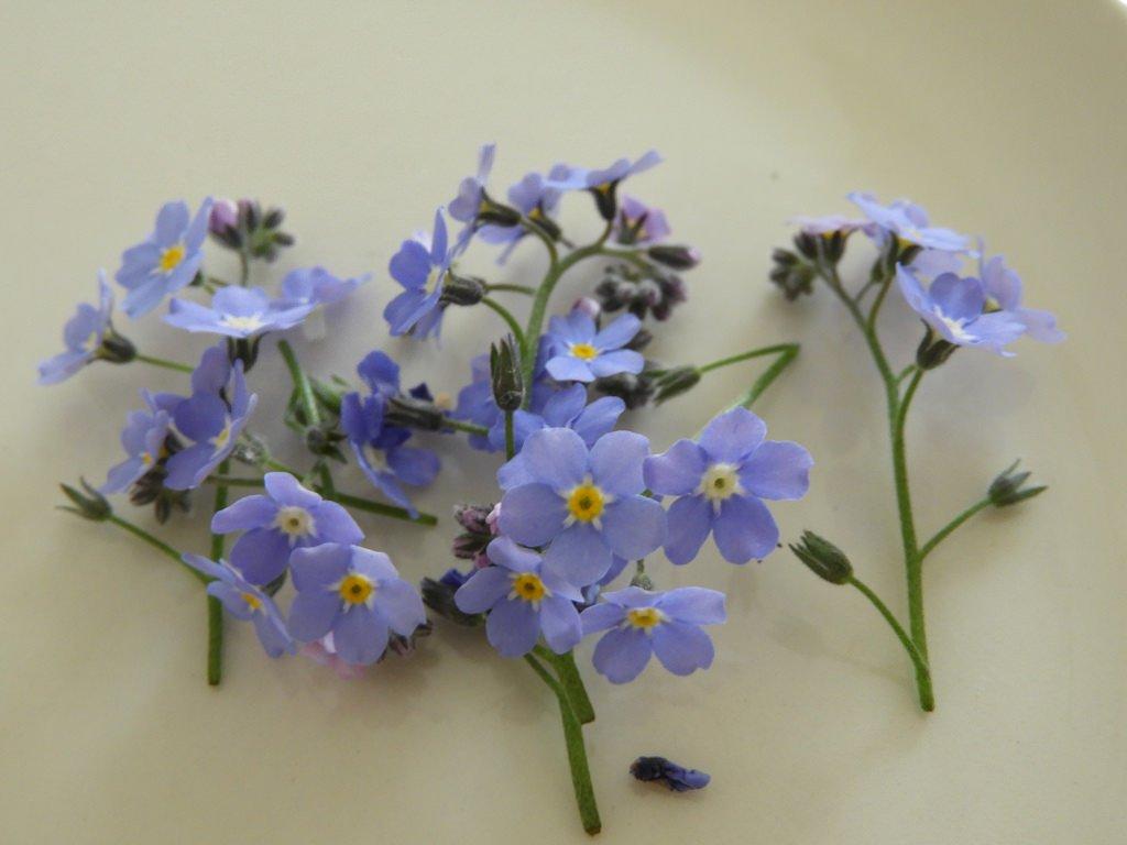 Prachtige eetbare bloemen.
